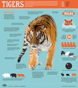 infografia ejemplo lauralofer